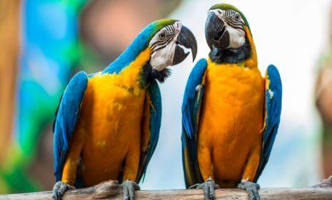 Papageien erobern die Städte Europas