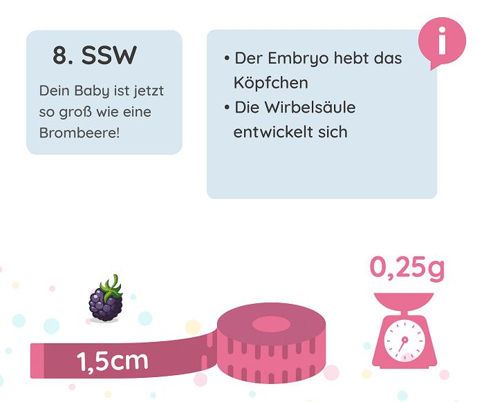 SSW 8: Entwicklung des Babys