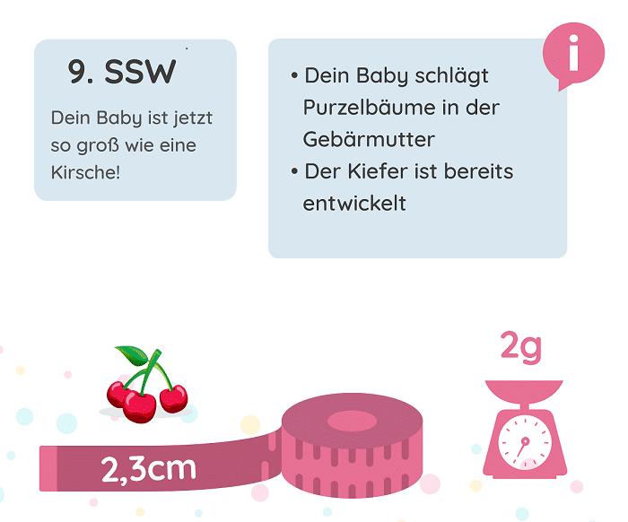 SSW 9: Entwicklung des Babys