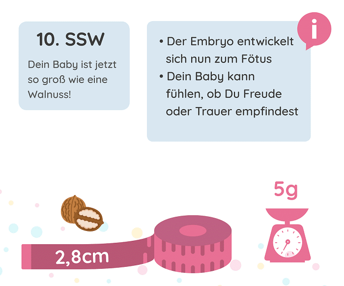 SSW 10: Entwicklung des Babys