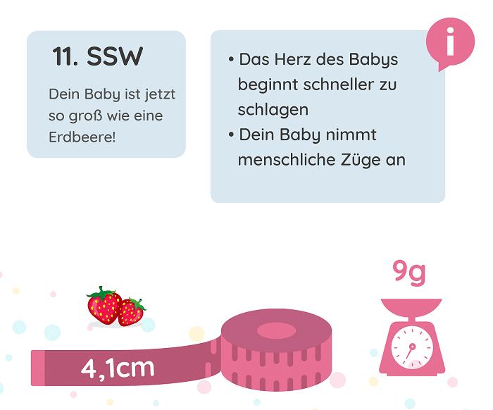 SSW 11: Entwicklung des Babys