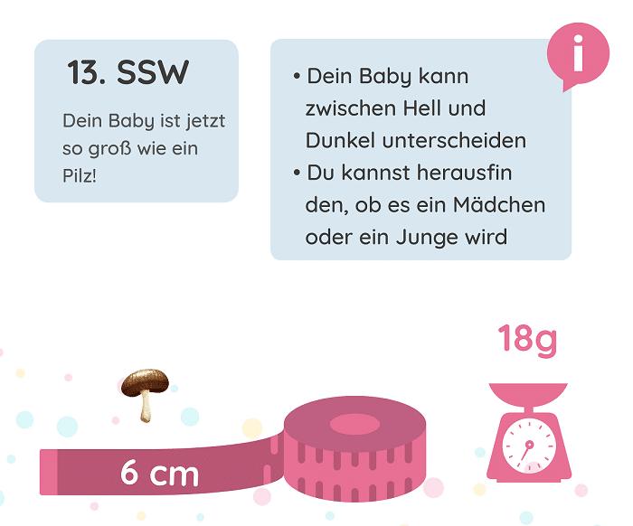 SSW 13: Entwicklung des Babys