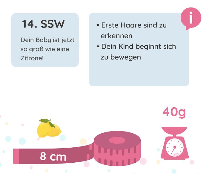 SSW 14: Entwicklung des Babys
