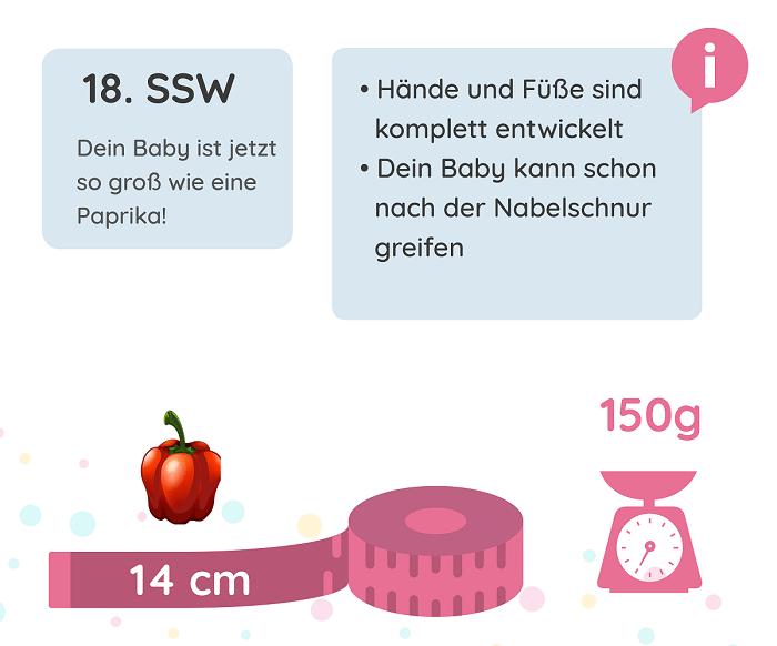 SSW 18: Entwicklung des Babys