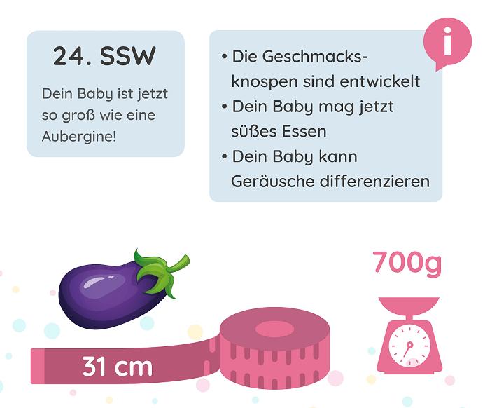 SSW 24: Entwicklung des Babys