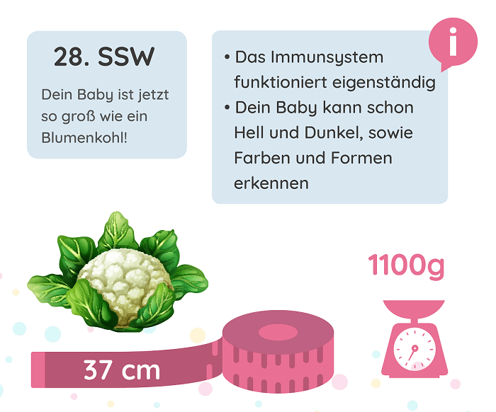 SSW 28: Entwicklung des Babys