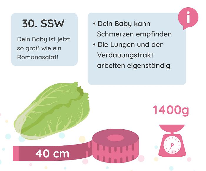 SSW 30: Entwicklung des Babys