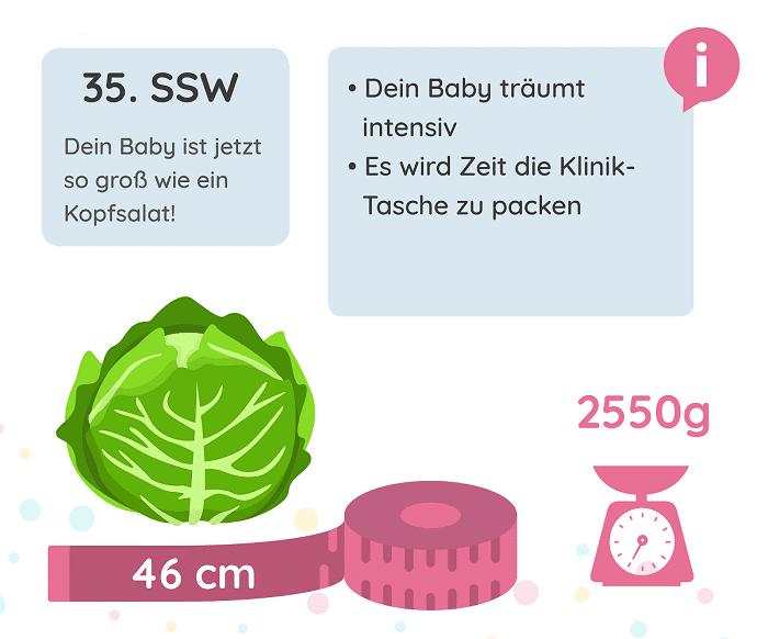 SSW 35: Entwicklung des Babys