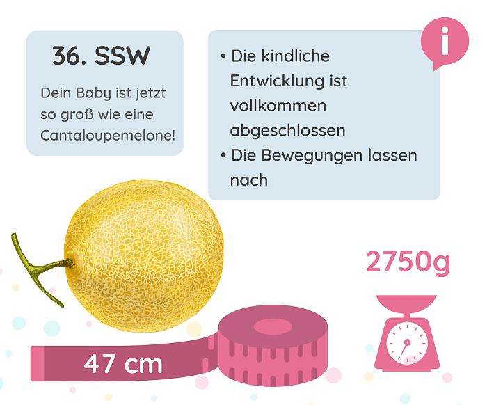 SSW 36: Entwicklung des Babys