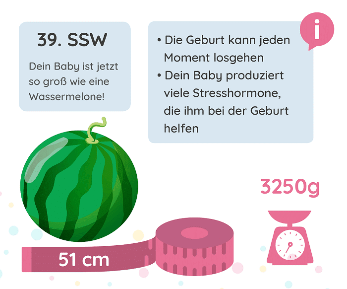 SSW 39: Entwicklung des Babys