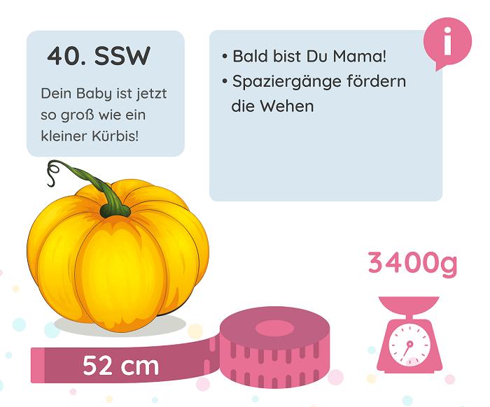 SSW 40: Entwicklung des Babys
