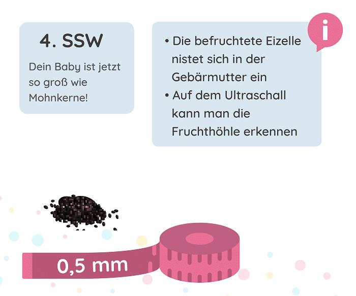 SSW 4: Entwicklung des Babys