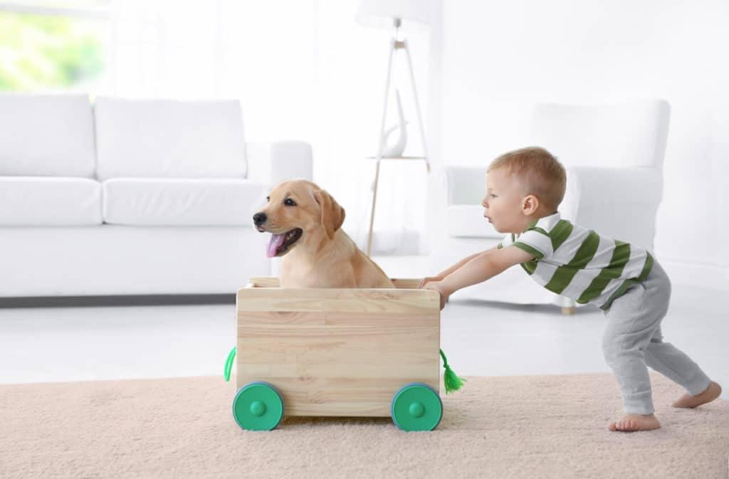 Pflegeleichte Haustiere